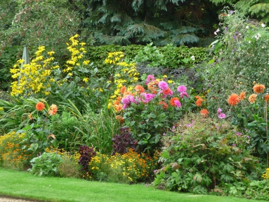 Клумба непрерывного цветения на садовом участке