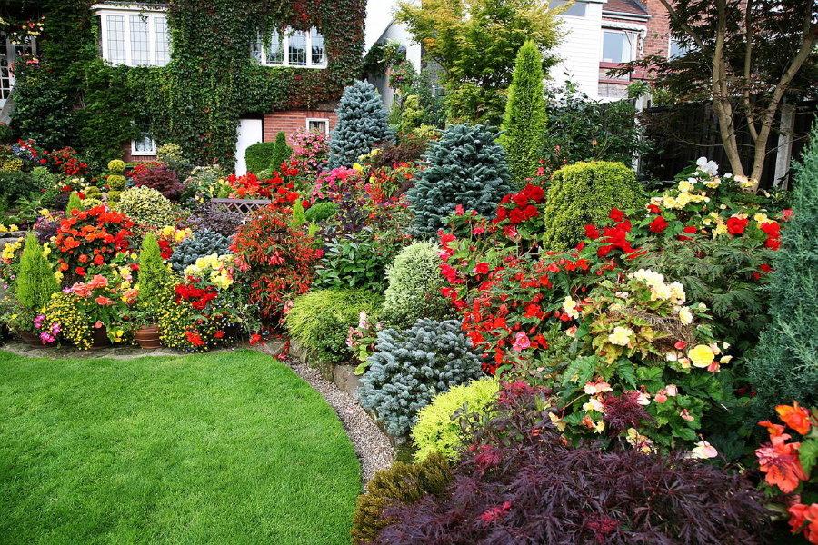 Миксбордер с декоративными кустарниками и цветами