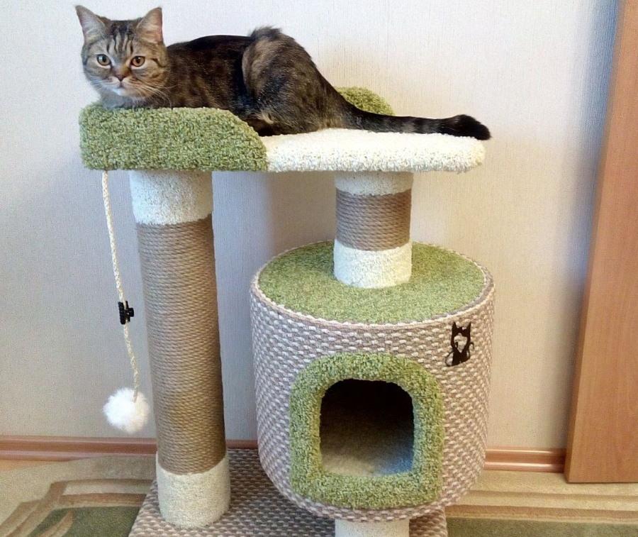 Когтеточка со спальным местом для домашней кошки