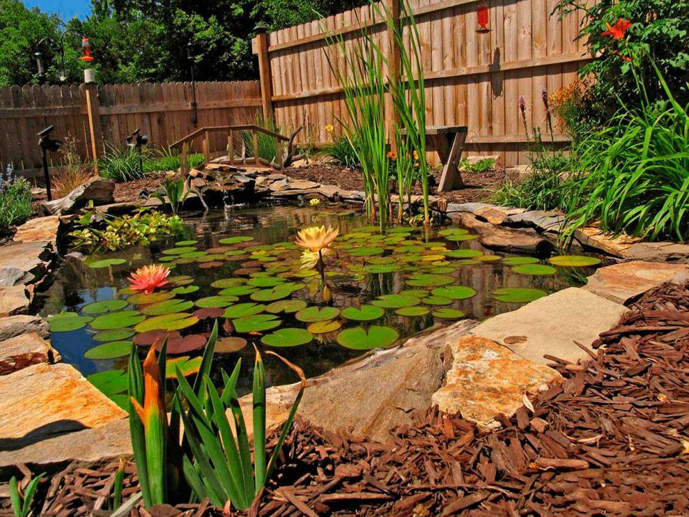 Садовый пруд с кувшинками на участке с деревянным забором