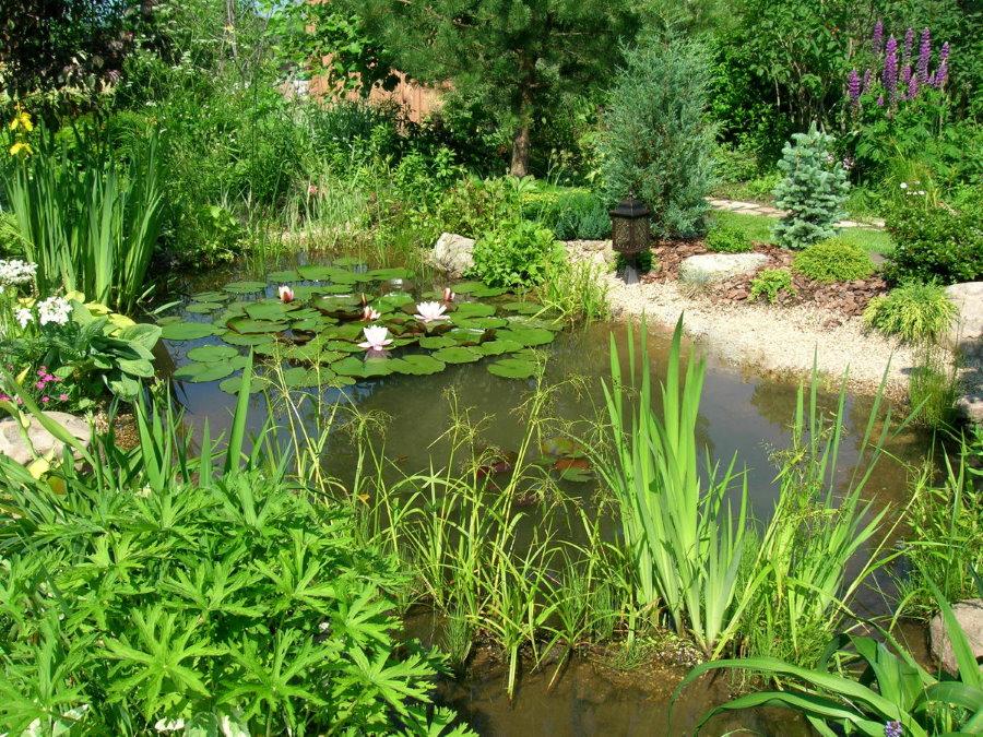 Фото небольшого водоема в пейзажном стиле
