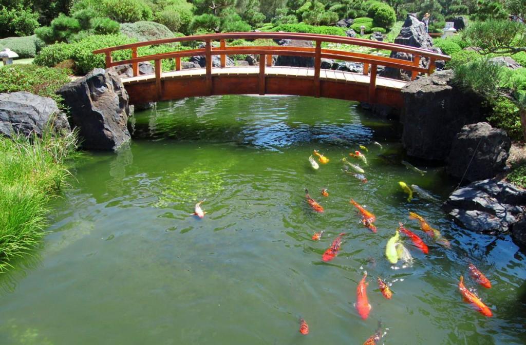 Деревянный мостик через водоем с рыбками