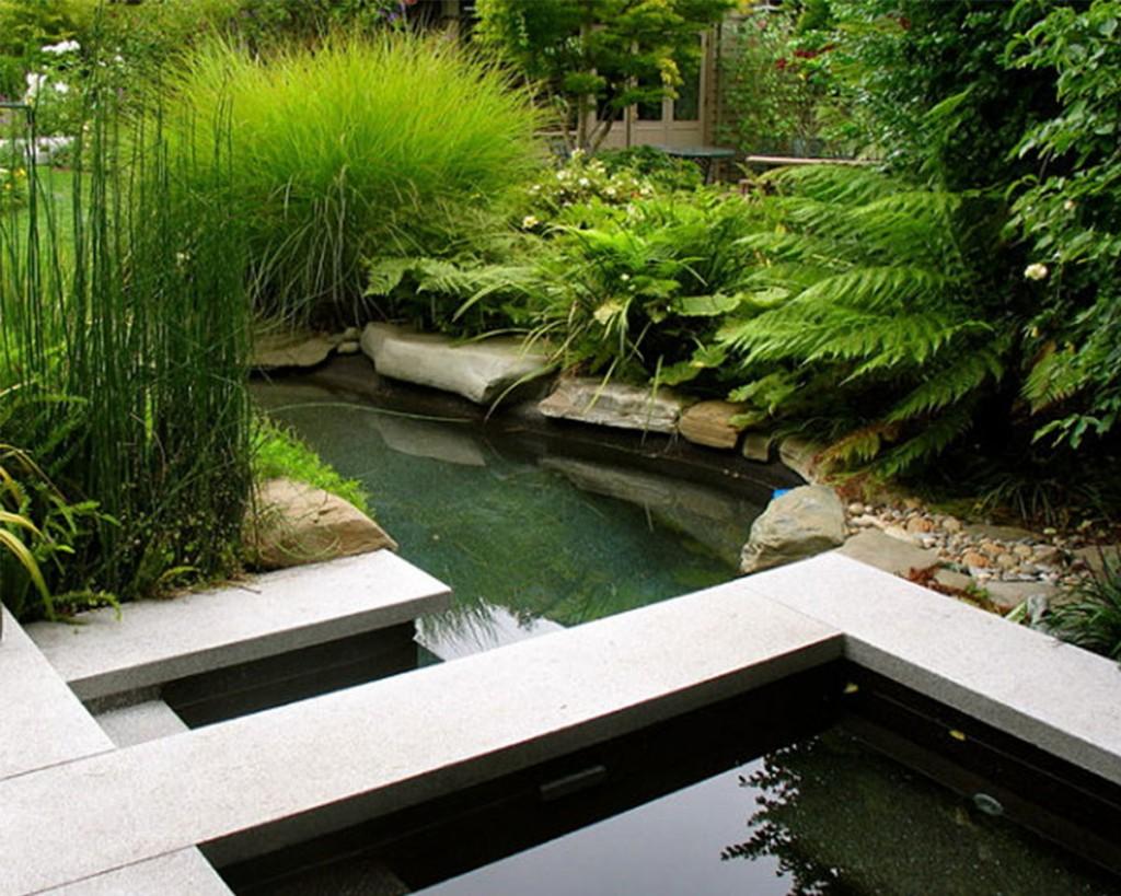 Папоротники и другие растения на берегу садового пруда