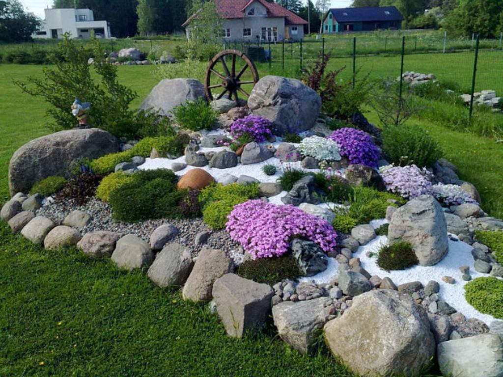 Сиреневые цветы на дачном альпинарии
