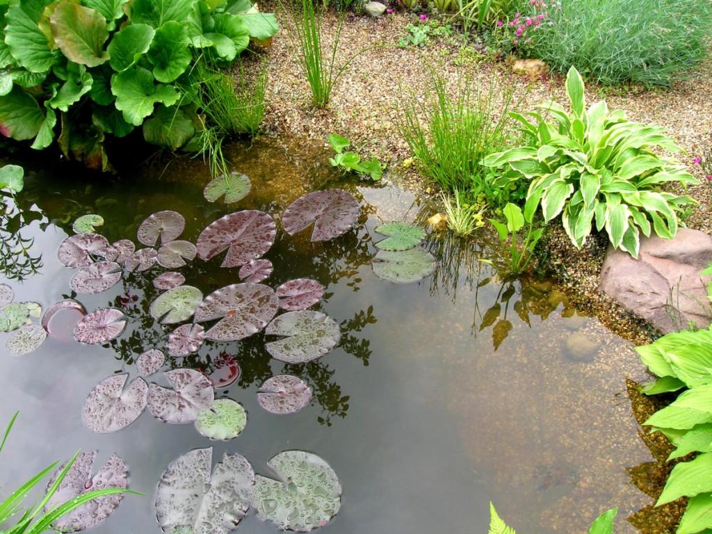 Хоста и другие растения на берегу водоема
