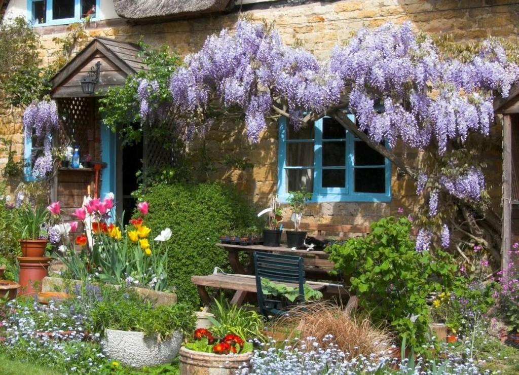 Красивые растения около стены загородного дома