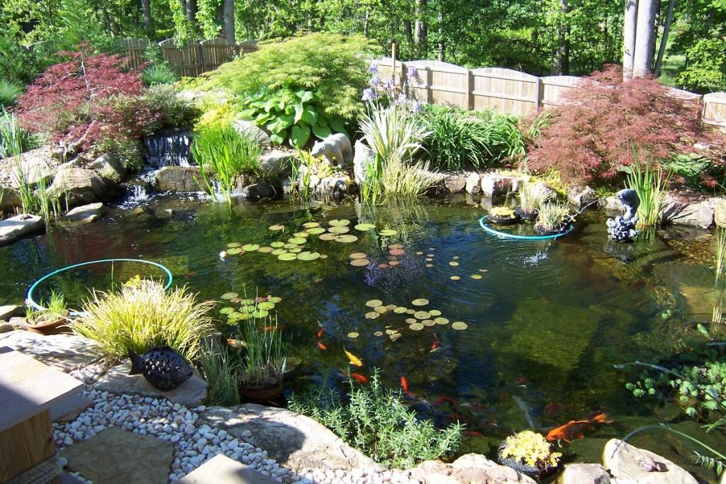 Дачный пруд с декоративными растениями