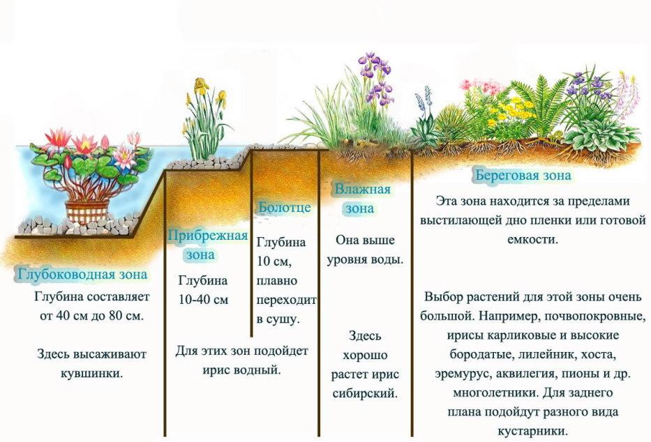 Схема посадки растений в садовом пруду