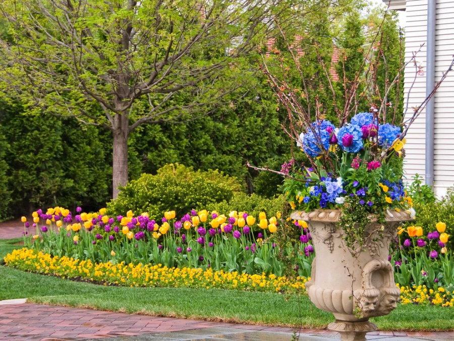 Весенняя клумба из разных тюльпанов
