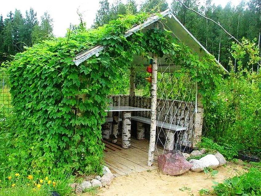 Садовая беседка из березы на дачном участке