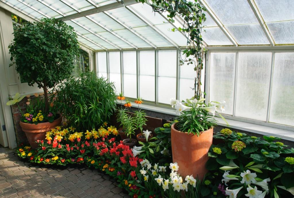 Зимний сад на застекленной лоджии в доме