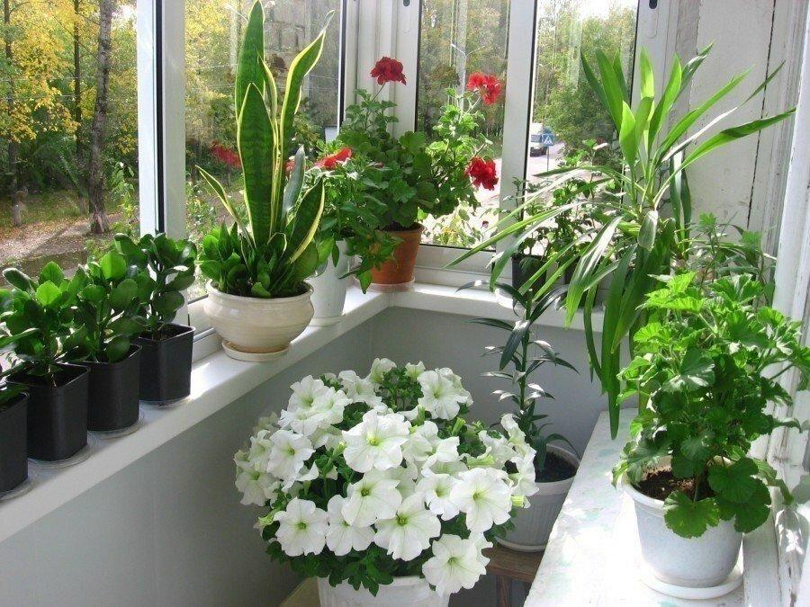 Декор подоконника балкона живыми цветами