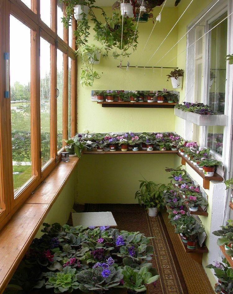 Расположение цветов в интерьере балкона