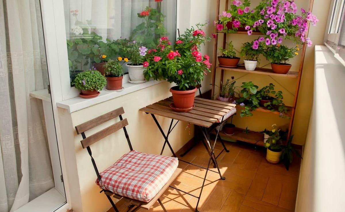 Красиво на балконе разместить цветы фото депутатом парламента