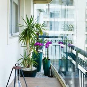 Живые растения в интерьере балкона