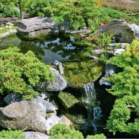Низкорослые хвойные растения на берегу водоема