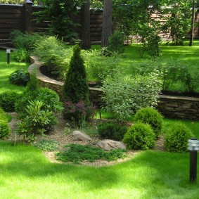 Тенистое место садового участка с молодыми хвойниками