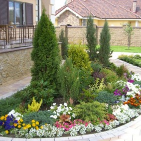 Цветущие многолетники перед вечнозеленым растениями