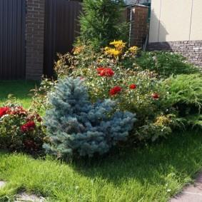 Садовая композиция с елками и цветущими кустарниками