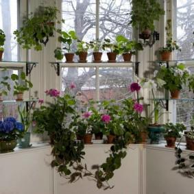 Декор балконного окна живыми цветами
