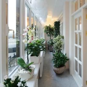 Домашняя оранжерея в интерьере балкона