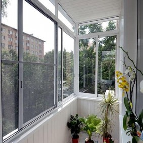Комнатные цветы на холодном балконе