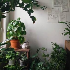 Домашняя оранжерея на теплой лоджии