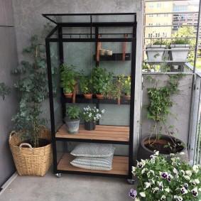 Парник для растений на балконе квартиры
