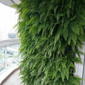 Живая стена на узком балконе