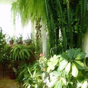 Тропические растения в интерьере балкона