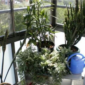 Комнатные растения на балконе с французскими окнами