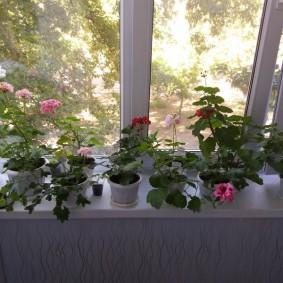 Подоконник балкона с живыми цветами