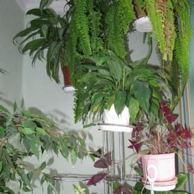 Стойка с растениями в горшках на теплом балконе