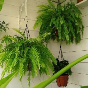 Декор балкона зелеными папоротниками
