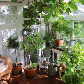 Теплый балкон с живыми растениями