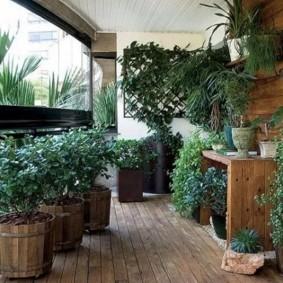 Крупногабаритные растения в деревянных кадках