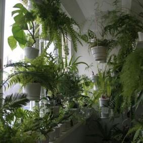 Теплолюбивые растения на балконе с солнечной стороны дома