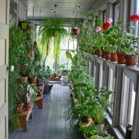Длинный балкон с растениями в горшках