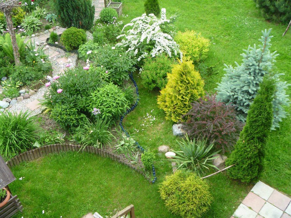 Вид сверху на уголок сада с молодыми туями