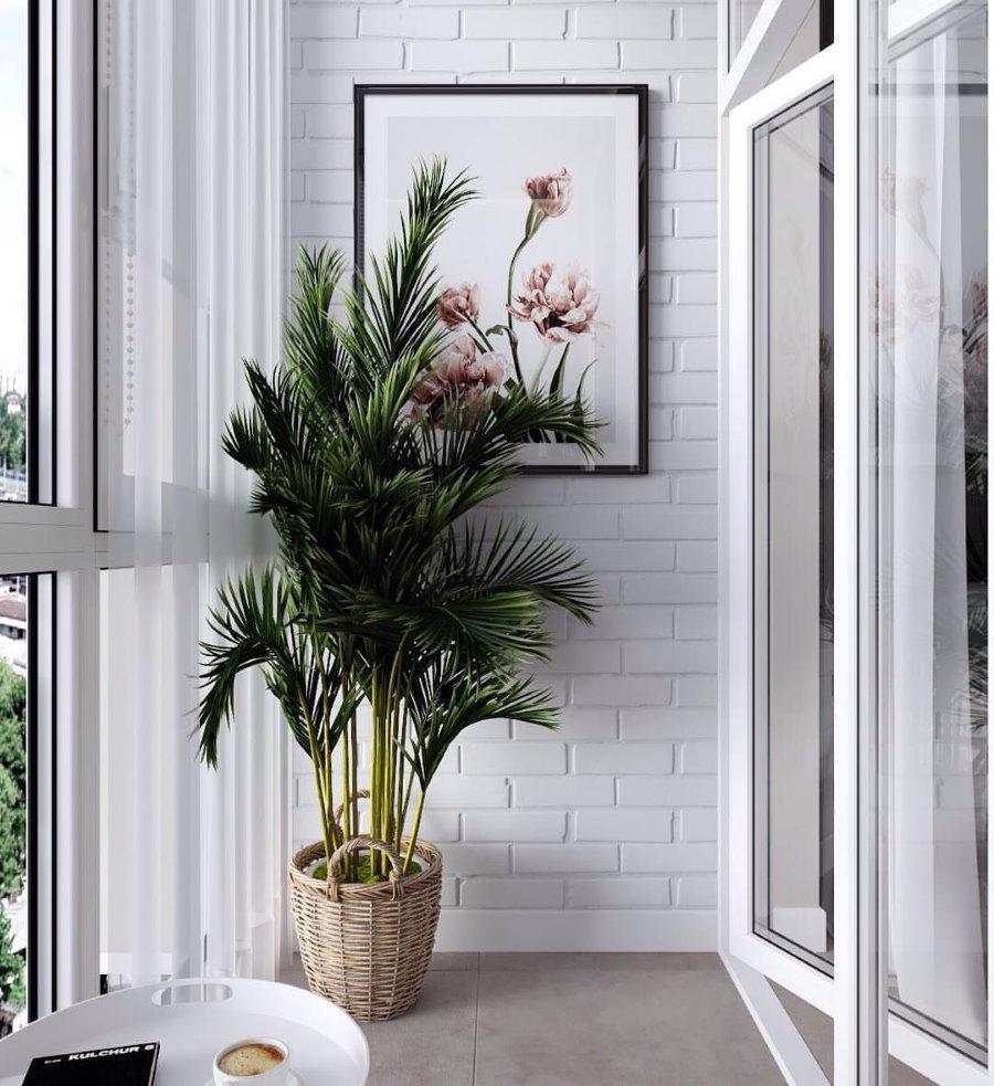 Интерьер балкона с пальмой в кадке