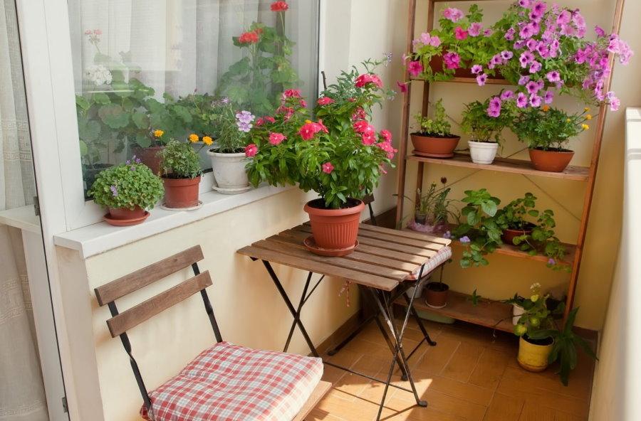Расстановка цветов в интерьере балкона