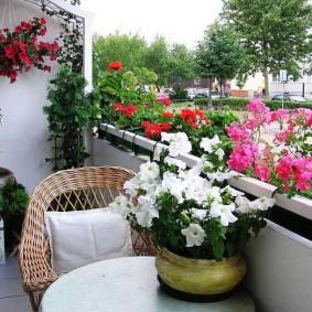 Уютная лоджия с красиво цветущими растениями