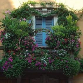 Декор балкона живыми растениями снаружи