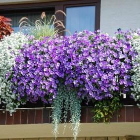 Ампельные цветы на парапете балкона