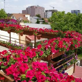 Красные петунии в горшках на балконе