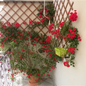 Деревянная решетка для растений на лоджии