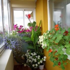 Закрытый балкон с цветущими растениями