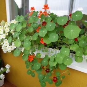 Живые цветы на внутреннем подоконнике лоджии