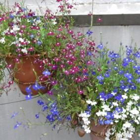 Полевые цветы в подвесных контейнерах