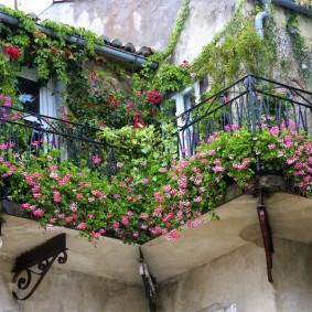 Оформление старого балкона однолетними цветами